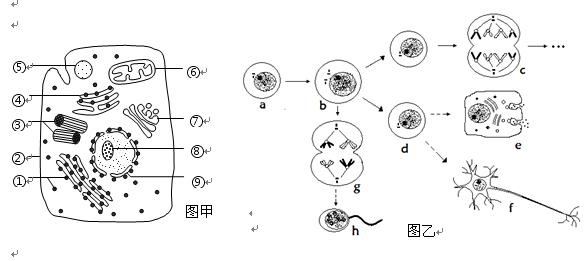 (2)该细胞结构与小麦根毛区细胞相比