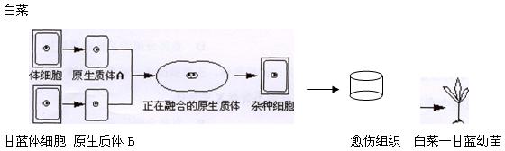 电路 电路图 电子 设计 素材 原理图 560_168