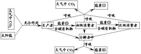 dna→rna→蛋白质 分析以下生态系统的能量流动和物质循环的关系简图